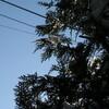 「光の春」、更に雪が融けました。