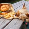 【BAR&GRILL BURGER CHOP】店内ペットOKのハンバーガー屋さん🍔