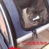 #428 猫の防災用キャリーの使用感と非常時の夫の考え方がかっこいい【日記】