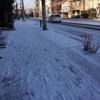 やっぱり雪!道理で寒いと思いました。
