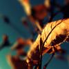 Autumn Leaves(枯葉)おすすめカバー集10選~ジャズスタンダード