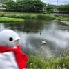 京都といえば鴨川だ!のんびりするには最高だね(京都バスまつり編その1)(218)