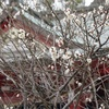 津田駅~機物神社~遊歩道 (冬の交野山散策1)