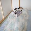 吉良さまのベッド