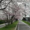 【道マラへの道:湯】春!白石サイクリングロードで大轟沈!の巻
