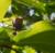 椿にスズメバチ、こいつが・・・  追記 : 二日後、痒みと患部が熱を持っている
