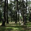 街中に現れる圧巻の松林~敷島公園~