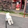 犬の保険料 500円上がる。
