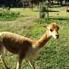 mallasaの動物園