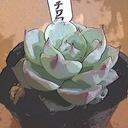 植物、いろいろ成長記