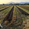 大豆の圃場で溝切りをキツツキと慰霊の日