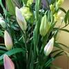 カウンターの花(4)