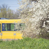 85mm単焦点レンズを持って春の公園を散歩した話