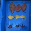 タニシが好きな葉っぱは何だろう!?実験
