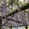 亀戸の藤、佐野みそ、YATOBOOKS