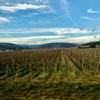【フランス】ブルゴーニュのワインツアー