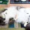猫とかいうパーフェクトアニマル