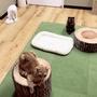 池袋の猫カフェデートのオススメは「空陸屋」。可愛い猫が多いので満足できるはず!