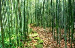 嵐山だけじゃない! 京都の竹林が美しいスポット5選