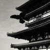 薬師寺東塔と一羽のカラス