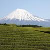 就活生に富士山を
