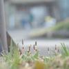 小さな春。