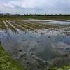 雨に濡れながら畦畔の草刈りと『テルマエ・ロマエ』