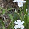 慎太郎生誕地の春。