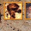 一万年前に宇宙人が書いた壁画がインドの洞窟に