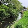 蓼川を歩く 神奈川綾瀬の川(1)