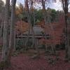 平家物語に登場する尼寺「祇王寺」の苔庭を飾る散りもみじ