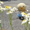 東京トガリくんが癒しを大放出!ぬいぐるくんは即売り切れ!?大人を癒す天才、東京トガリくんの可愛さを調査!