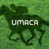 ICカードで馬券購入!JRAの新サービス『UMACA』のかんたん登録方法