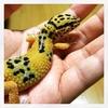 爬虫類を飼い始めました。