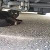 黒い猫の虐待事件☆