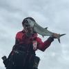 サワラ、乱舞!✨どうかしてるぜ…今年の伊勢湾・ショアジギング