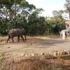 冬の「よこはま動物園ズーラシア」を見学する