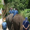 【ゾウの村】チェンマイ動物園よりおすすめなのはここ!【タイ子連れ旅27】