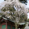 Thurs. 塩釜神社2