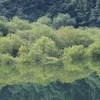 飛騨の秋景色 『マツムシソウ可愛いですね!』