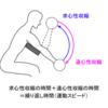 筋トレで筋肥大の効果を最大にする「運動のスピード」を知っておこう