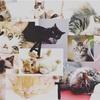 猫の日特別企画 〜音楽の猫