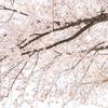 暖かい日にはもう一足早い春の狭山湖散歩ランチはアドリアーノでいかがでしょうか。