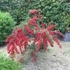 赤い実の赤増してより秋深む