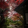 【181】新宿区中井 坂の街に佇む古民家