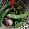 【ベジブロス】野菜くずの有効活用