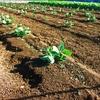土を育てるもの、生命エネルギーを育むこと。