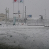 今日の雪。