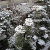 今日の佐賀は、雪が積もっています。昨晩は、飲みに行ってきました。