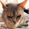 令和2年2月22日は猫の日特集号なり!